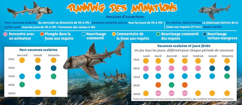 animations web