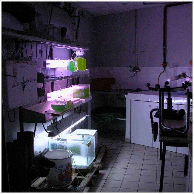 Laboratoire - Aquarium de Lyon