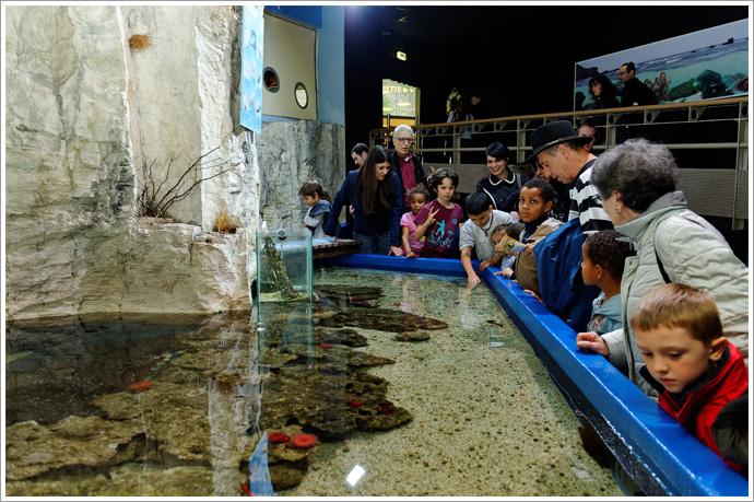 aquarium lyon les coulisses de l aquarium