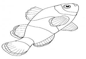 Clown Fish– Aquarium Lyon