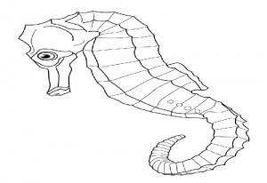 Hippocampus– Aquarium Lyon