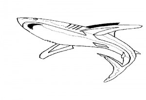 Shark – Aquarium Lyon